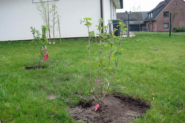 Pflanzaktion im Schulgarten